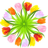 vector Round card of colorful spring tulips Stock Photos