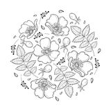 Vector round composition with outline Dog rose or Rosa canina, medicinal herb. Ornate flower, leaf and hip isolated on white. Vector round composition with Royalty Free Stock Photos