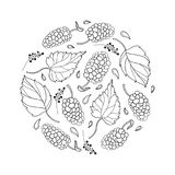 Vector round composition with outline Mulberry or Morus with ripe berry and leaf in black isolated on white background. Contour drawing of Mulberry bunch for royalty free illustration