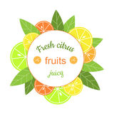 Vector round frame with citrus. Stock Image