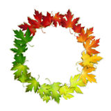 Vector round frame with colorful autumn leaves Royalty Free Stock Image