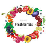 Vector round frame with garden berries on white background Royalty Free Stock Images