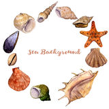 Vector round frame with watercolor drawing shells Royalty Free Stock Photography
