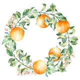 Vector round frame of watercolor orange and flowers. Watercolor illustration wreath of mandarin and leaves stock illustration