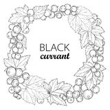 Vector round wreath with outline Black currant. Bunch, berry and leaves isolated on white background. Ornate floral elements. Royalty Free Stock Images