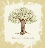 Vector a árvore Fotos de Stock