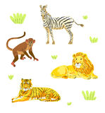 Vector safari animals set Royalty Free Stock Photo