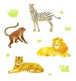 Vector safari animals set. Wild animals and grass, tiger, lion,monkey, zebra vector illustration