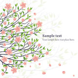 Vector sakura Royalty Free Stock Images