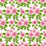 Vector sakura flower seamless pattern background. Elegant cherry blossom texture for backgrounds. Royalty Free Stock Images