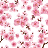 Vector sakura flower seamless pattern element. Elegant cherry blossom texture for backgrounds. Royalty Free Stock Images