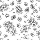 Vector sakura seamless pattern of flowers. Vector sketch art, hand drawn sakura seamless pattern, flowers and leaves Royalty Free Stock Photography