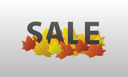 Vector sale with autumn leaves. Vector illustration Stock Photo