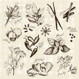Vector Sammlung von gezeichneten Gewürzen und Kraut der Tinte Hand Lizenzfreie Stockfotos