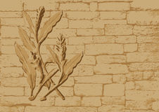 Vector - Sand stone sculpture on wall Royalty Free Stock Photos