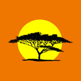 Vector Schattenbild des Akazienbaums im Safarisonnenunterganghintergrund A Stockfotografie