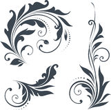 Vector Scroll Set Stock Images
