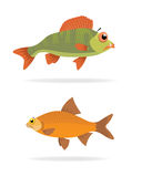 Vector sea fish. Two  sea fish, big and small Stock Image