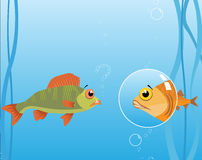 Vector sea fish. Vector, sea, fish, bubbles, artwork, illustration. klipart, cartoon, aquarium Royalty Free Stock Image