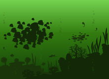 Vector of sea fishes. Vector illustration of beautiful of sea fishes on a bright green background with algae and stones Stock Photography