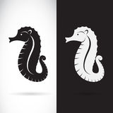 Vector of a sea horse design. Royalty Free Stock Image