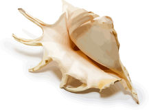 Vector sea shell Stock Images