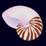 Vector sea shell Royalty Free Stock Images