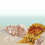 Vector sea shell hand drawn. Vintage Holiday Sea shell on beach background. Scallop shell for Greeting card or travel cards Stock Photo