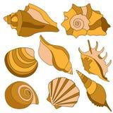 Vector sea shells. Summer holidays design elements. Stock Photography