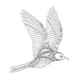 Vector Seagull. Zentangle Common Gull illustration, flying bird Stock Photos