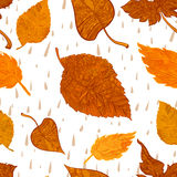 Vector seamless background autumn foliage Stock Images