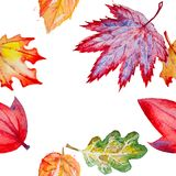 Vector seamless background with autumn leaves Stock Photography