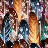 Vector seamless background with colorful feathers Royalty Free Stock Image