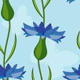 Vector seamless background with cornflowers Royalty Free Stock Photos