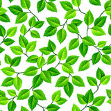 Vector seamless background with green leaves. Stock Photography