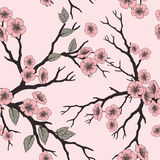 Vector seamless background with sakura blossoms and folliage.  Stock Image