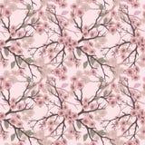 Vector seamless background with sakura blossoms and folliage. Stock Photos