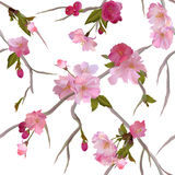 Vector Seamless background with sakura flowers Stock Photos