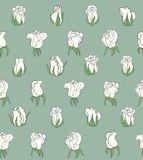 Vector seamless background with white roses Stock Images
