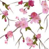 Vector Seamless Background With Sakura Flowers Stock Photos