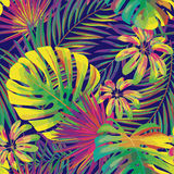 Vector seamless beautiful artistic bright tropical pattern with monstera leaf, frond, split leaf, philodendron, summer Stock Image