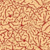 Vector. Seamless brain convolutions. Royalty Free Stock Image