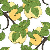 Vector Seamless Colored Fruit Pattern Stock Photography