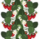 Vector Seamless Colored Fruit Pattern stock illustration