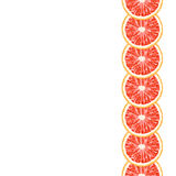 Vector seamless decorative vertical border of grapefruit slices. Royalty Free Stock Photography