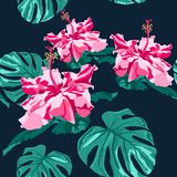 Seamless tropical flower. Blossom flowers for seamless pattern background. Vector illustration. Vector seamless fashionable graphical free hand drawing hibiscus Stock Image
