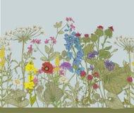 Vector seamless floral border. Stock Photography