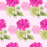 Vector seamless floral pattern. Vector background with geranium flowers. Vintage seamless pattern. Illustration victorian style. Designs for textiles, fabrics Stock Photos