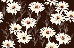 Vector seamless floral pattern with  daisy flowers. Floral background Stock Image