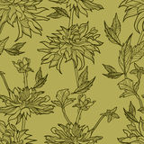Vector seamless floral pattern with herbarium Stock Image